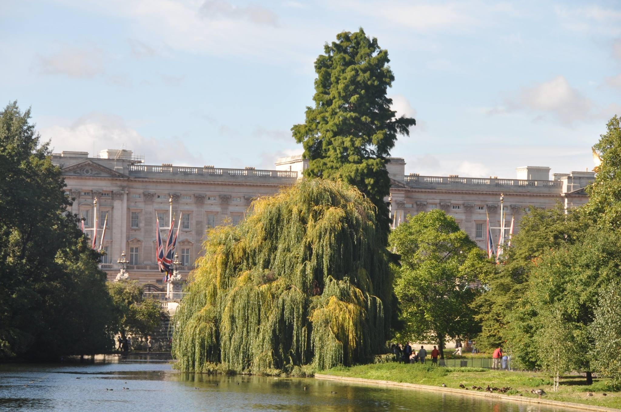 . .  مشهد يطلّ على قصر باكنجهام من سانت جيمز بارك